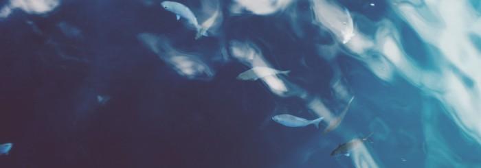 Fisk for utvikling – møte nr. 2
